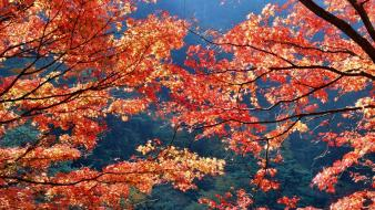 Japan autumn (season) leaves Wallpaper