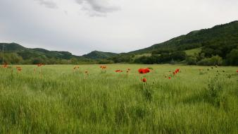 Landscapes nature fields hills poppies wallpaper