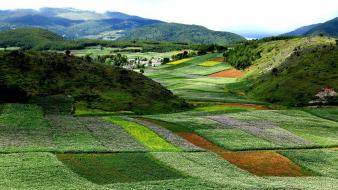Landscapes nature flowers china bloom yunnan wallpaper