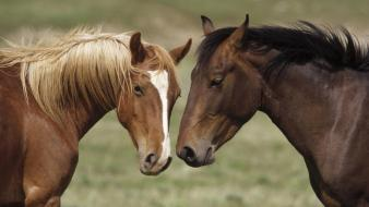 Nature animals young horses montana wallpaper
