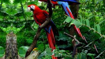 Nature birds parrots wallpaper