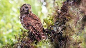 Owls branches birds wallpaper