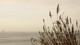Sepia seascapes wallpaper