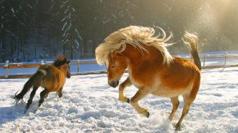 Snow horses wallpaper