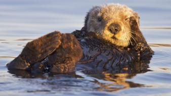 Us marines corps otters bay sanctuary monterey wallpaper