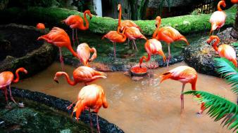 Water flamingos birds wallpaper