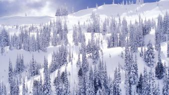 Winter white national park washington hurricane ridge wallpaper