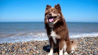 Beach animals dogs shore wallpaper