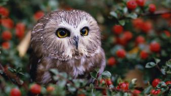 Bokeh owls berries baby birds wallpaper