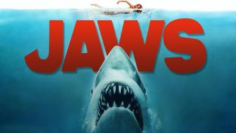 Film jaws wallpaper