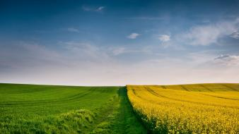 Landscapes fields yellow flowers skies wallpaper