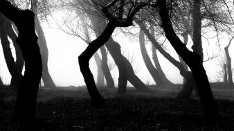Light black and white trees night forest darkness wallpaper