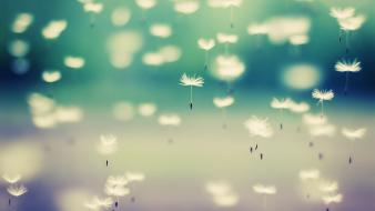 Nature artistic flowers floating float dandelions falling wallpaper