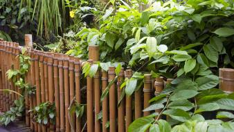 Nature bamboo bridges plants wallpaper