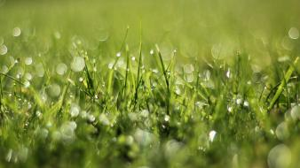 Nature grass bokeh depth of field Wallpaper
