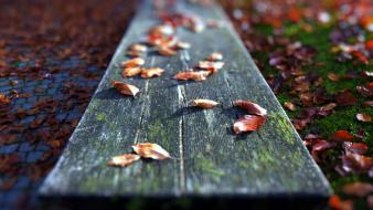 Nature leaves bench autumn wallpaper