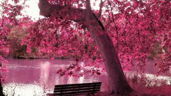 Trees purple bench lakes wallpaper