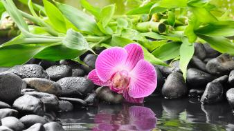 Flowers pebbles reflections orchids wallpaper