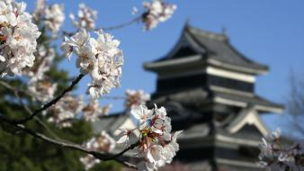 Flowers spring (season) asian architecture blurred background wallpaper