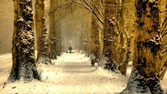 Green nature winter trees avenue wallpaper