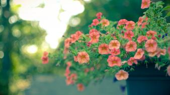 Nature flowers bokeh pink wallpaper