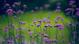 Nature flowers depth of field purple Wallpaper