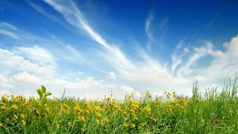 Nature flowers grass fields meadow meadows skyscapes Wallpaper