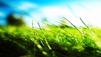 Nature grass hdr photography depth of field wallpaper