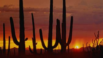 Sunset clouds nature desert arizona cactus skyscapes view wallpaper