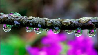 Water nature drops branches Wallpaper