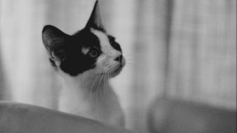 Black and white cats room monochrome wallpaper