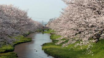 Blossoms flowers spring (season) rivers flowered trees wallpaper