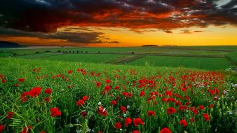 Clouds nature flowers sunlight poppies wallpaper