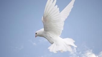 Clouds nature white birds skyscapes dove wallpaper