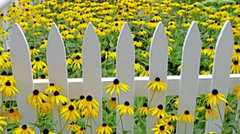 Flowers fences garden vibrant yellow coneflowers wallpaper