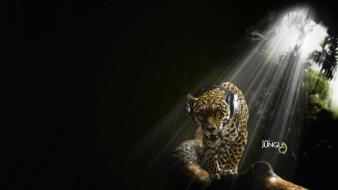 Headphones music jungle audio jaguars wallpaper