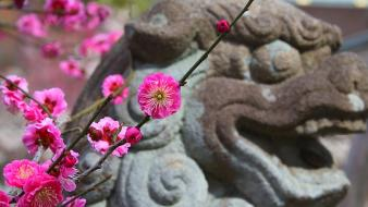 Japan cherry blossoms flowers spring (season) statues pink wallpaper