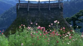 Japan flowers spring (season) asian architecture blurred background wallpaper
