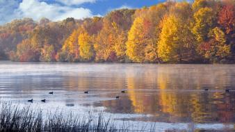 Landscapes nature ducks lakes wallpaper
