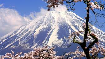Mount fuji cherry blossoms flowers spring (season) wallpaper