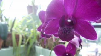 Nature flowers depth of field orchids purple wallpaper