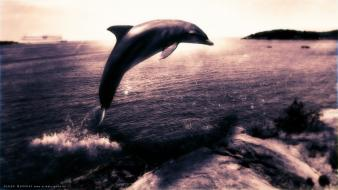 Ocean magic dolphins wallpaper