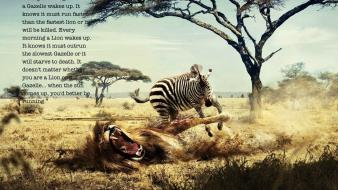 Quotes zebras lions wallpaper