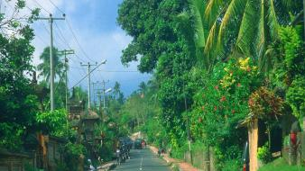 Roads power lines palm trees india wallpaper