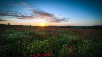 Sun dawn flowers fields united kingdom poppies wallpaper