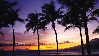 Sunset palm trees wallpaper