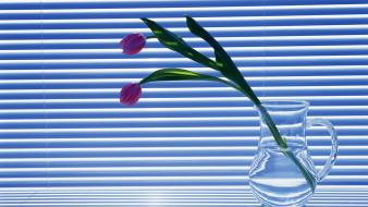 Tulips still life mini blinds wallpaper