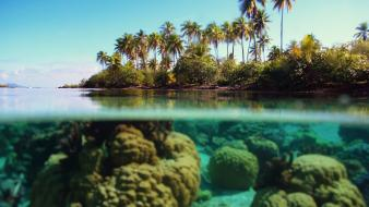 Water ocean landscapes beach coral palm trees bora Wallpaper