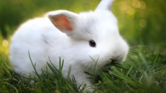 Bunnies grass baby animals Wallpaper