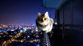 Cityscapes night lights cats collar cities tabby wallpaper